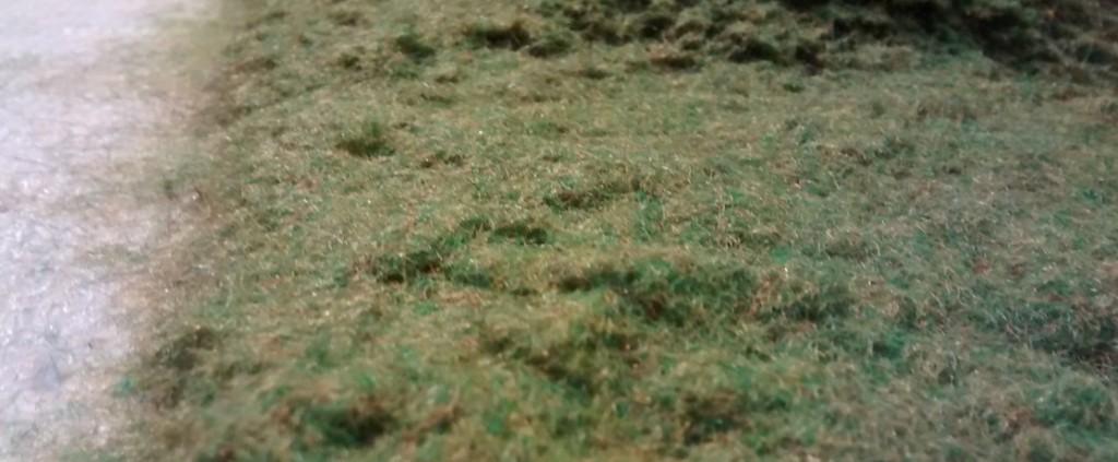 An manchen ebenen Stellen kam auch etwas langes Gras mit drauf.