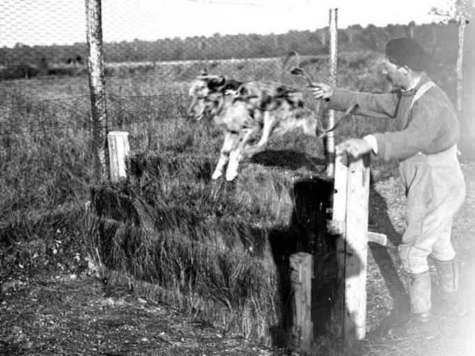 Das maskottchen der VII. Armee bei Lure ( Departement Haute-Saône ). September 1917.