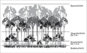 Stratifikation im tropischen Regenwald. (#1)