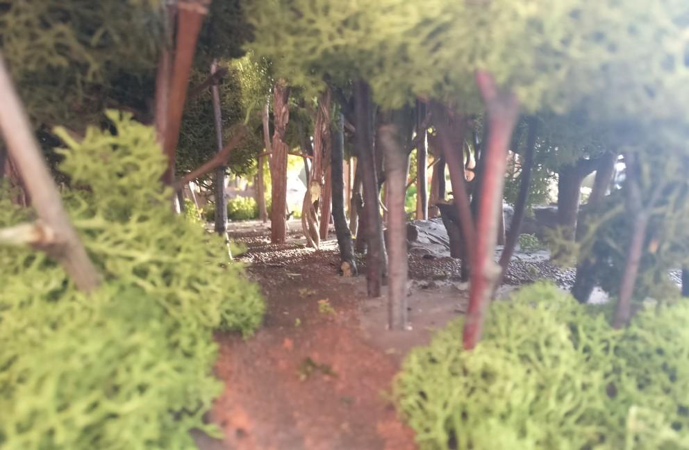 Ein Blick durch den Urwald. Hier führt eine kleine Lichtung durch den Urwald auf dem Aufleger.
