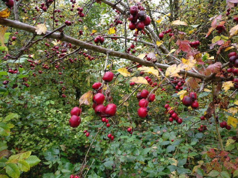Impressionen von Sturmis Herbstspaziergang.