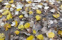 Herbstspaziergang: taugt der Dreifarb-Tarnanstrich wirklich?
