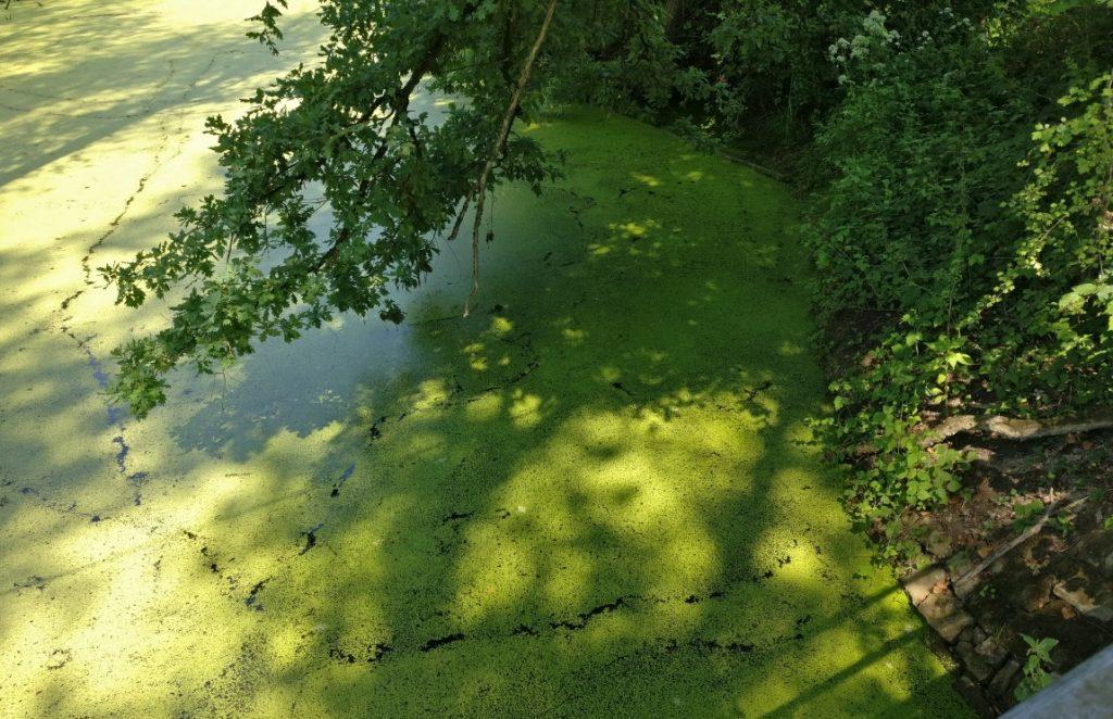 Am Ufer erkennt man auch den eher dunklen, fast schwarzen Erdboden, der nur spärlich bedeckt ist.