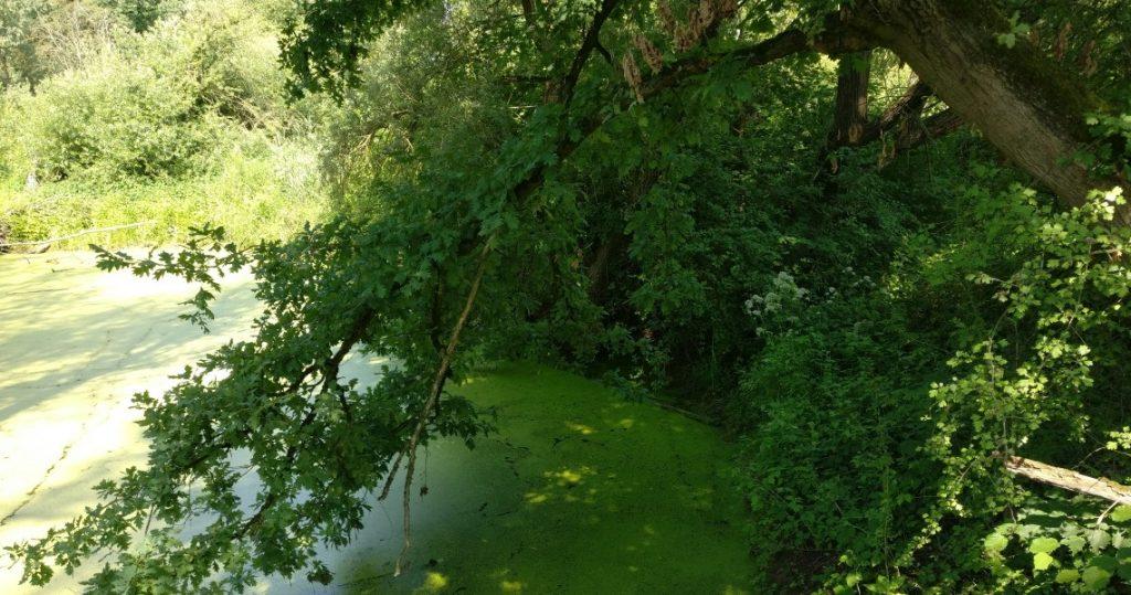 Die bis fast aufs Wasser hernieder ragenden Bäume könnten auch eine Herausforderung werden.