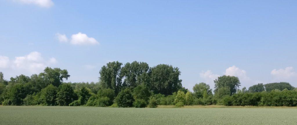 Ein Bild wie dieses habe ich bei der Ausgestaltung des Umlandes vor Augen.