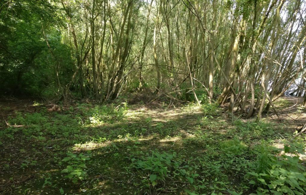 Kennzeichnend - zumindest für diese Rheinaue - ist das teils sehr dichte Unterholz und der dunkle, wenig bewachsene Waldboden.