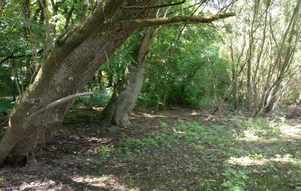 Versumpfte oder wie hier verlandete ehemalige Flussarme könnten auch auf die Spielplatte kommen.