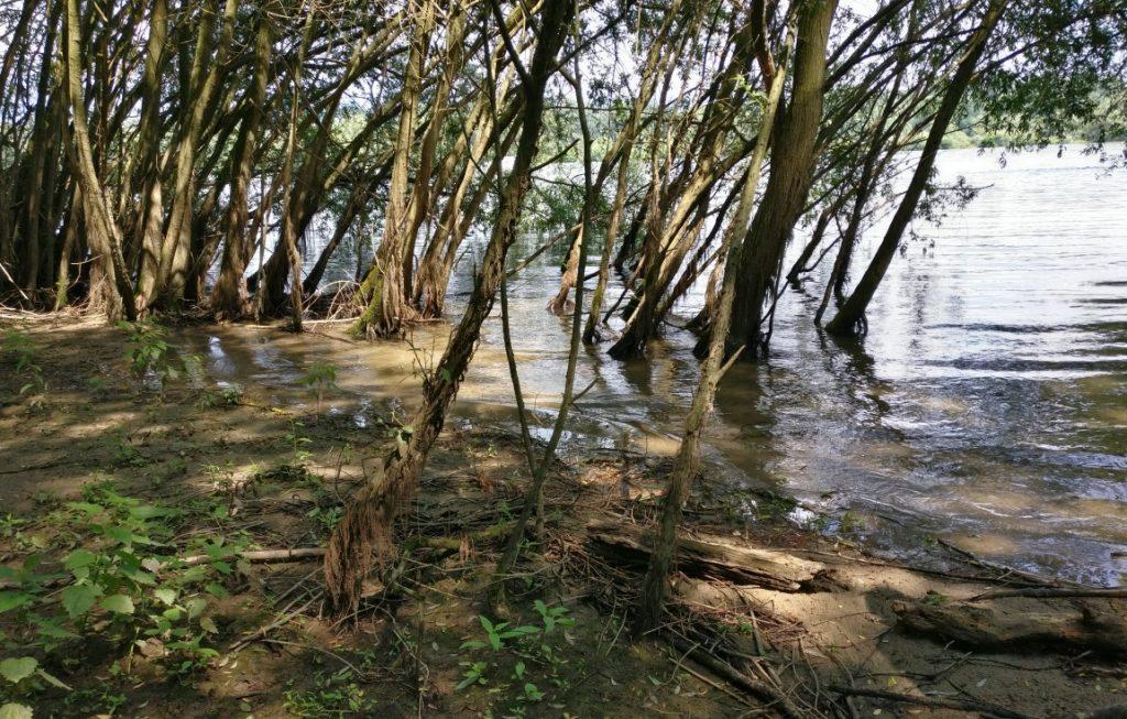 Ein Bereich, den ich schon lange im Hinterkopf habe, das sind überflutete Partien, aus denen Bäume ihre Stämme und Blattwerk aus dem Wasser nach oben strecken - die Füße weiterhin fleißig im kühlen Wasser badend. Was man hier am Rhein nicht sieht, was ich aber im Spreewald flächendeckend erblickt habe, das ist Schilf und langes Gras, das mit dem Fuß im Wasser spriest und wächst. Ich denke, sowas muss auch rein.
