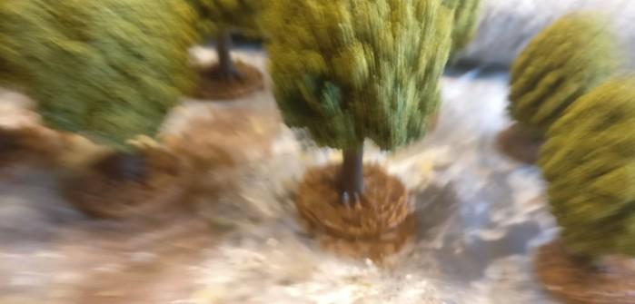 Der Wald, die Bäume und das Gras