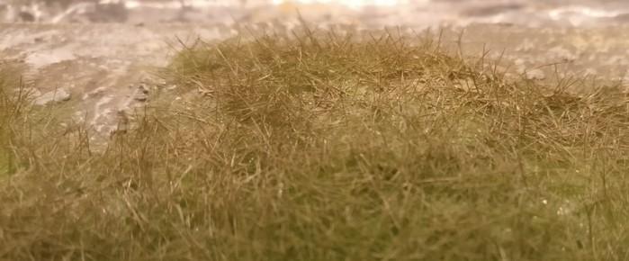 """Das Gras nach dem Enfärben mit """"Erdfarbe"""""""