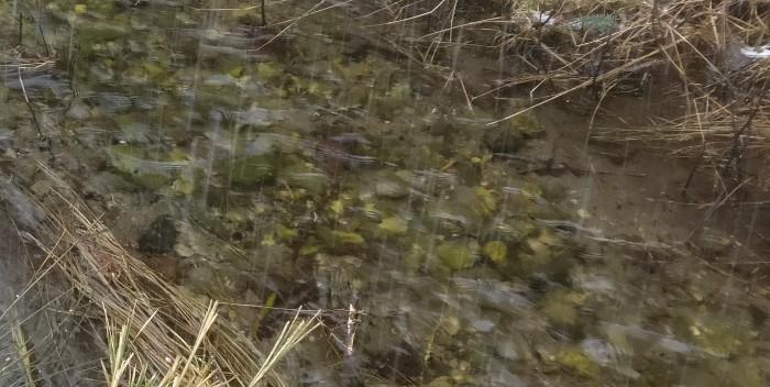 Hier nochmal ein paar Details des Wiesenbachs. Gelb- und Grüntöne finden sich hier. Im Original leuchtete das Wasser dort tatsächlich in einem Gelb-Grün-Ton und das bei all dem umgebenden Schneetreiben!