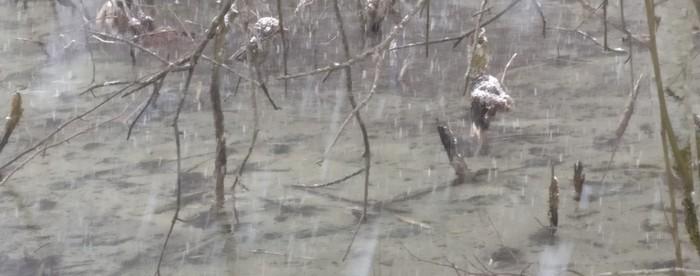 Dünne Baumstämme ragen aus dem eiskalten Wasser. Manche sind auf Stümpfe verkürzt. Im Sommer muss die Fläche eigentlich trocken liegen. Wie sonst hätten die Bäume sich entwickeln können?