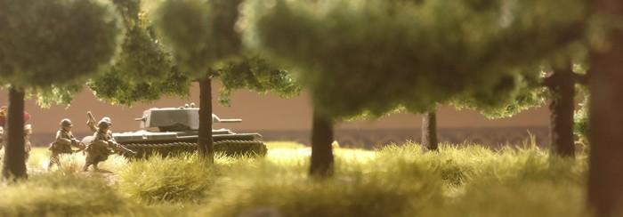 Blick aus dem Waldesinneren.