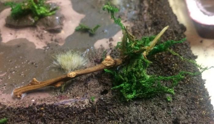Frisch gepflanzte Sträucher.