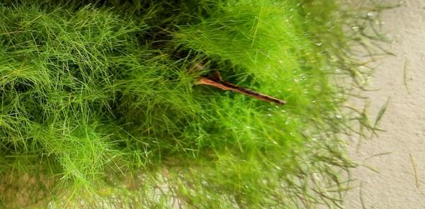 Aus dem Grashaufen lubbert ein Karabiner heraus....