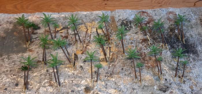 Die Palmen vom Wadi Tarfaui