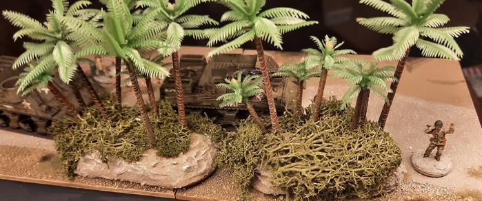 Blick ins Unterholz von oben. So sieht das Islandmoos zwischen den Palmen aus.